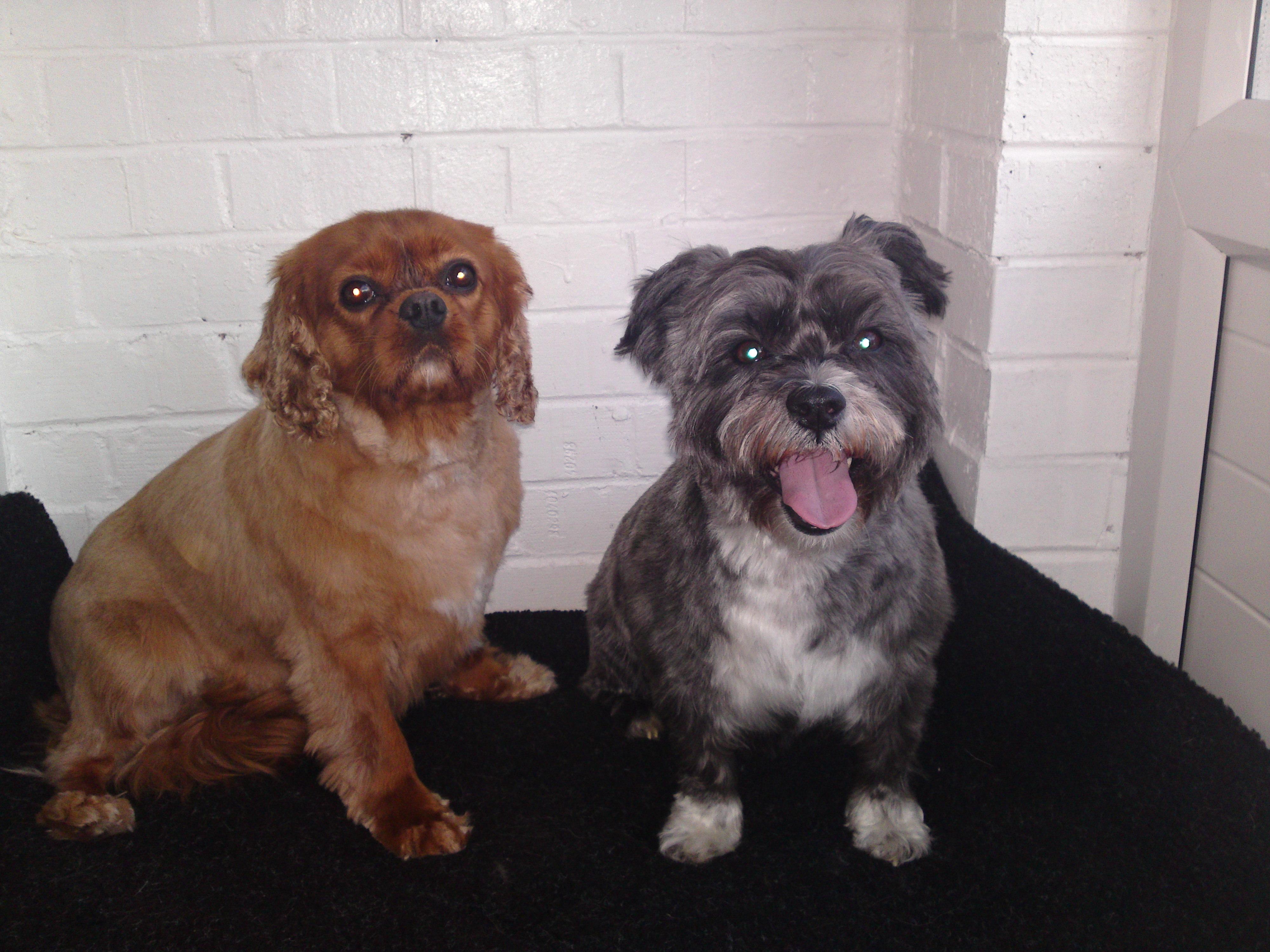 Dog Grooming Newark